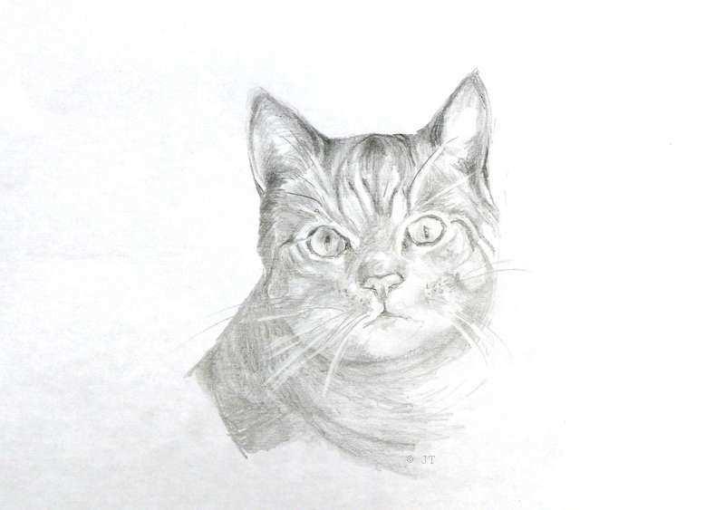 Le croquis du chat, repérez bien le sens des poils